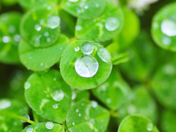 秋の乾燥を防ぐ!乾燥肌、喉が渇く…内側から潤いを与える方法と食材