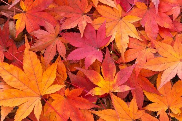 秋の体調不良の原因は?秋の養生術で対策!